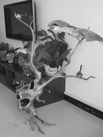 自主创业项目――珍禽标本工艺品店(资料包目录)