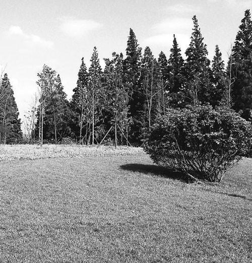 土地中林业用地的重要地位及其特性