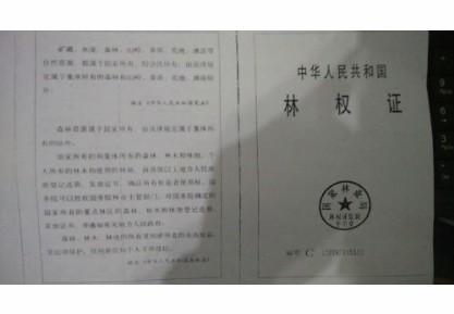 网曝河北遵化市化石峪村合法林地被掠夺投诉无门(组图)